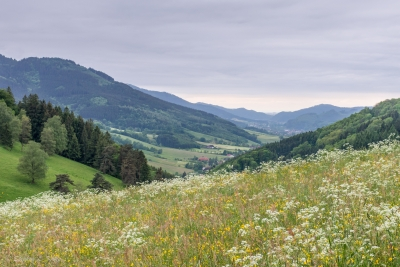 Black Forest Landscape – 2