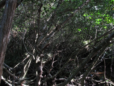 View Inside A Mangrove Forest
