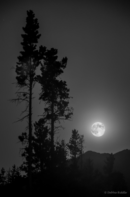 Super Moon Silhouettes