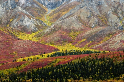 Color In The Taiga And Tindra