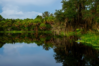 Myakka River Glass