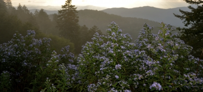 Aster View