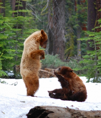 The Two Bears
