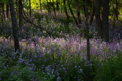 Spring Wildflowers At Dawn