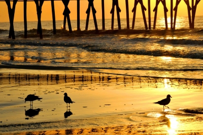 Gulls In Sunrise