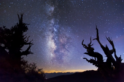 Milky Way And Bristlecones