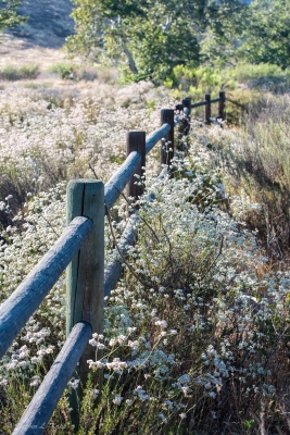 Rustic Fence In The Field