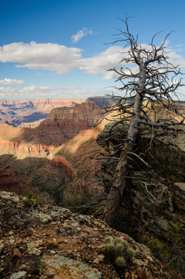 Old Guard Watches Over Grand Canyon