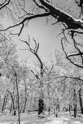 35mm B&w Woods