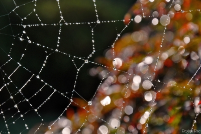 Web With Early Morning Dew