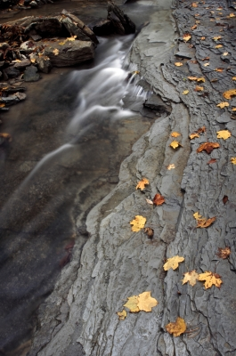 Creek And Autumn Leaves