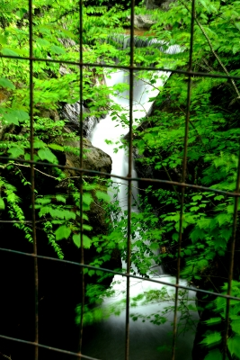Caged Nature