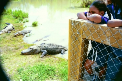 Girl And Aligator