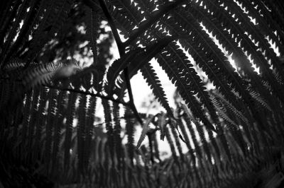 Looking Through The Ferns