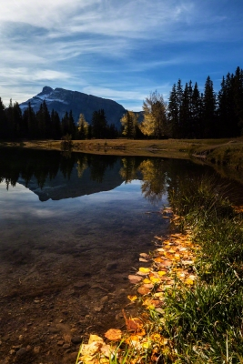 Autumn Leaves At Mt Rundle