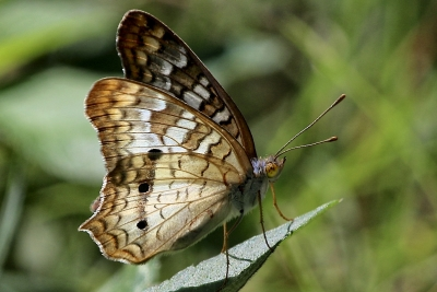 Butterfly At 400mm