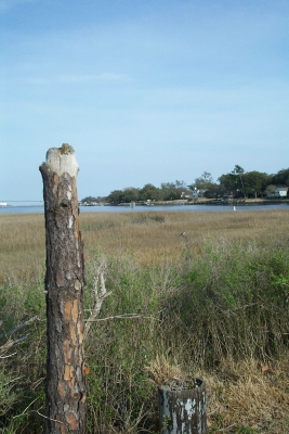 Wetlands Of Charleston