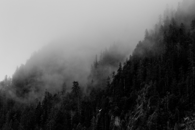 Kenai Fjords, Morning Fog Bw 0758