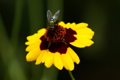 Fly And Flower