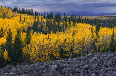 Autumn Storm On Grand Mesa