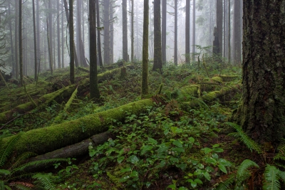 Shaping The Forest Floor