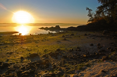 Sunrise In A Private Cove On San Juan Island