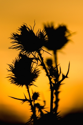 Silhouettes Dancing In The Autumn Sunset