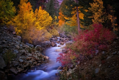 Eastern Sierra Fall Foliage