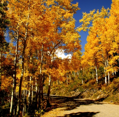 The Road To Autumn