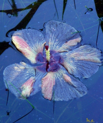 Flower On The Water