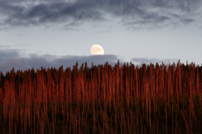 Sunset And Moonrise In Yellowstone