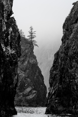 Kenai Sea Stacks In Fog Bw 0392
