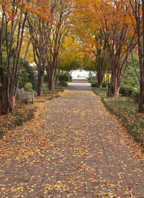 Fall In The Gardens