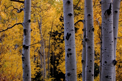 Little Cottonwood In The Fall
