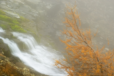 One Of The Last (first) Larches In Casauröl Valley,