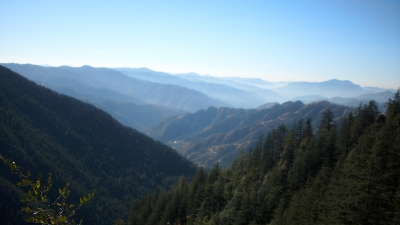 A Tropical Forest In Shimla