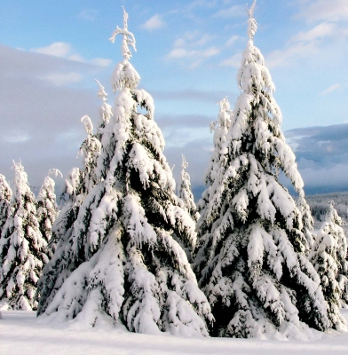 Very Cold Trees