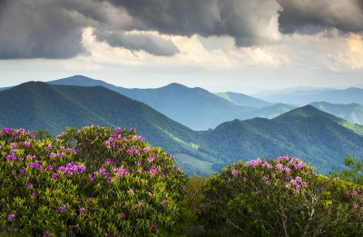 Spring Blooms On Appalachian Trail – Roan Mountain Highlands