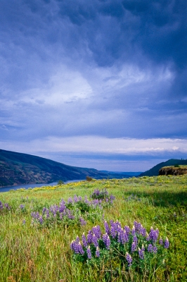 Storm Clouds And Lupine, Rowena Crest, Or