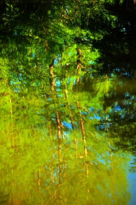 Treetop Reflections