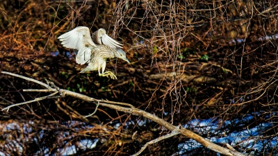 Night Heron Landing Strip