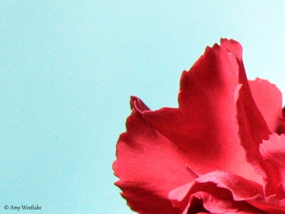 Carnation Abstract
