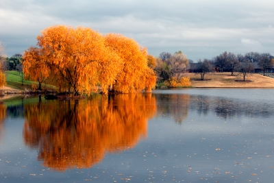 Fall Willow Trees Reflecting On Mcconnell