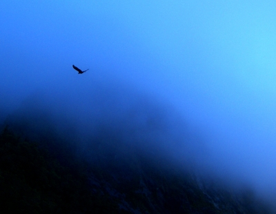 Out Of The Blue, Emerged Through The Fog