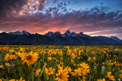 Tetons And Wildflowers At Sunset