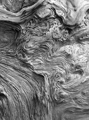 Old Tree Textures