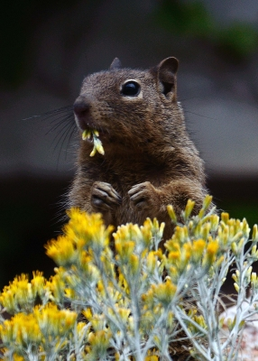 Not Another Squirrel Picture