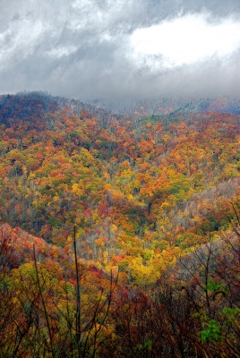 Fall In The Smoky Mountains