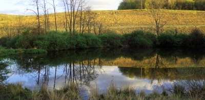 A Glass Pond In Spring