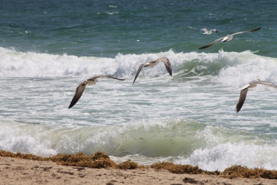Sand, Surge And Seagulls